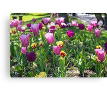 Tulips Park Gardens Canvas Print