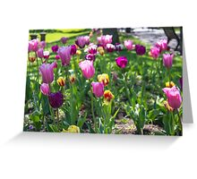 Tulips Park Gardens Greeting Card
