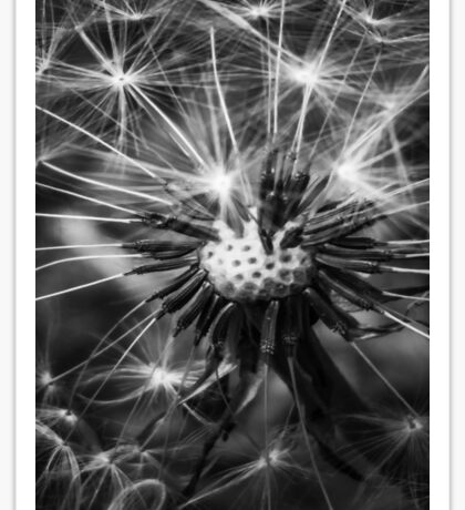 Dandelion Fluff - Black and White Sticker