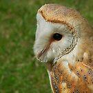 Gentle Barn Owl - Tyto alba by Susie Peek