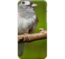 Dark Eyed Junco Perched on a Branch iPhone Case/Skin
