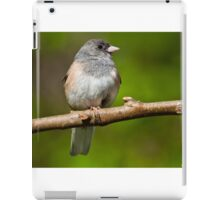 Dark Eyed Junco Perched on a Branch iPad Case/Skin