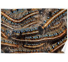 Eastern Tent Caterpillars   Poster