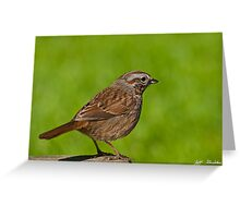 Song Sparrow on a Log Greeting Card