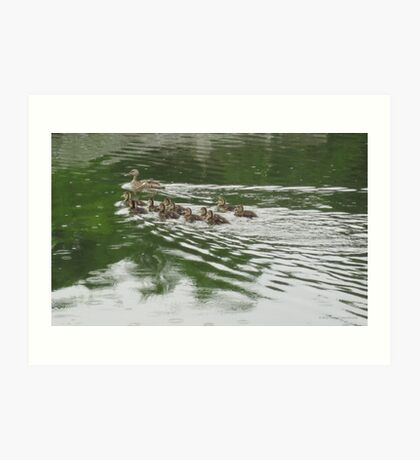 Eleven Duckling's in the Rain Art Print