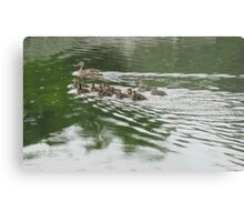 Eleven Duckling's in the Rain Metal Print