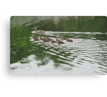 Eleven Duckling's in the Rain Canvas Print