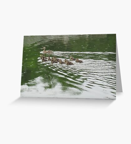 Eleven Duckling's in the Rain Greeting Card