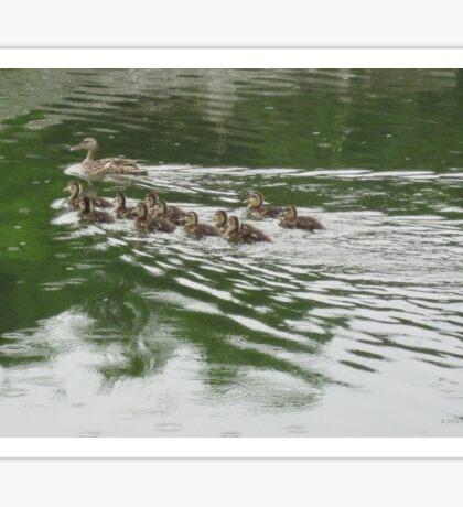Eleven Duckling's in the Rain Sticker