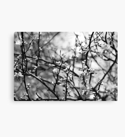Even When I'm Sleeping Canvas Print