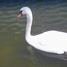 Gliding swan by ♥⊱ B. Randi Bailey