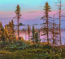 Morning Light by jules572