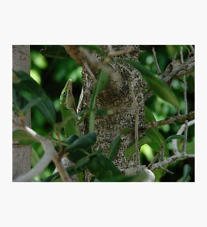 The Green Lizard Photographic Print