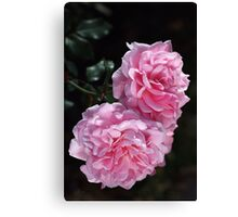 Double Delight Pink Roses Canvas Print