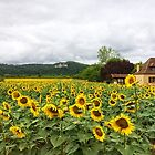 Sunflowers, Dordogne, France by Ludwig Wagner