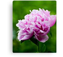 Showy Pink Pedals Canvas Print