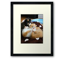 Litter of kittens Framed Print