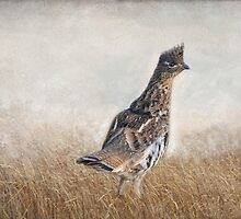 Grouse - Red Morph by Lynda   McDonald