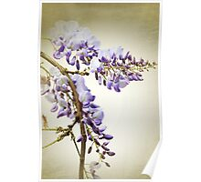 Wisteria textured Poster