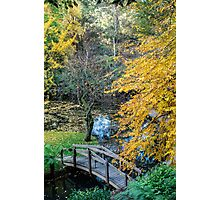 Alfred Nichols Gardens in the Dandenongs Photographic Print