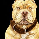 American Pit Bull Terrier by didielicious