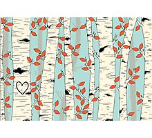 In the Birch Trees Photographic Print