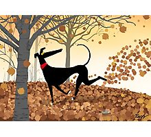 Autumn Hound Photographic Print