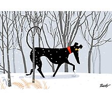 Winter Hound  Photographic Print
