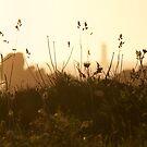 Le Four dans les herbes by Jean-Luc Rollier