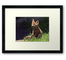 Fantastic Mr. Fox Framed Print