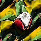 Tulip bouquet by ♥⊱ B. Randi Bailey