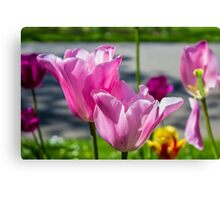 Tulips from Amsterdam Canvas Print