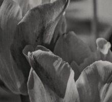 A Study of Tulips Sticker