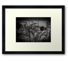 A Study of Tulips Framed Print