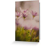 Purple Daisies Greeting Card