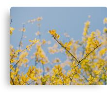 Yellow Leaves Canvas Print