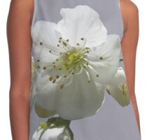 cherry tree in blossoms on lilac grey background Contrast Tank