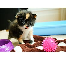 Tiny tortie Photographic Print