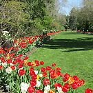 Tiptoe Through the Tulips by Monnie Ryan