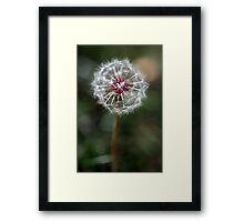 Dandelion Seed Head Framed Print