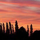 Golden sky by KMorral