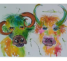 Colourful Quirky Cows Photographic Print