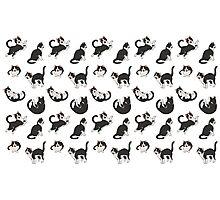 Cat pattern Photographic Print