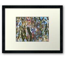 Australian Eucalypt Framed Print