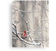 Red Bird On Snowy Branches - Winter Scene with Common Redpoll Canvas Print