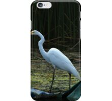 Great White Heron iPhone Case/Skin