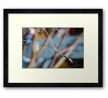 Charolette's Other Web Framed Print