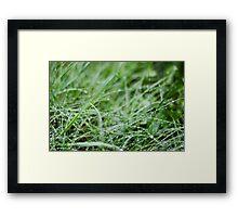 Blades of Dew Framed Print