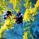 bee-cause two heads are better than one........ by LoreLeft27
