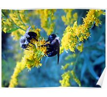 bee-cause two heads are better than one........ Poster